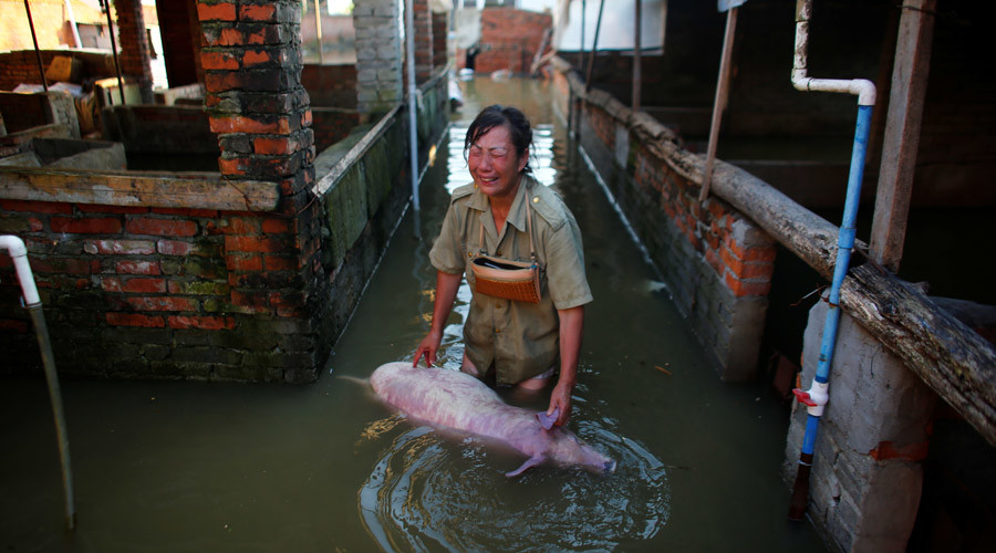 A woman with a body of a dead pig at a flooded farm in Xiaogan, Hubei Province, China, July 22, 2016. © Darley Shen