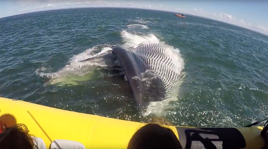 Giant fin whale makes rare appearance, misses tourist boat by inches (VIDEOS)