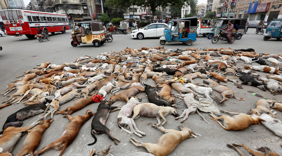 The carcasses of dead dogs are collected after they were culled using poison by the municipality in Karachi, Pakistan, August 4, 2016. © Akhtar Soomro