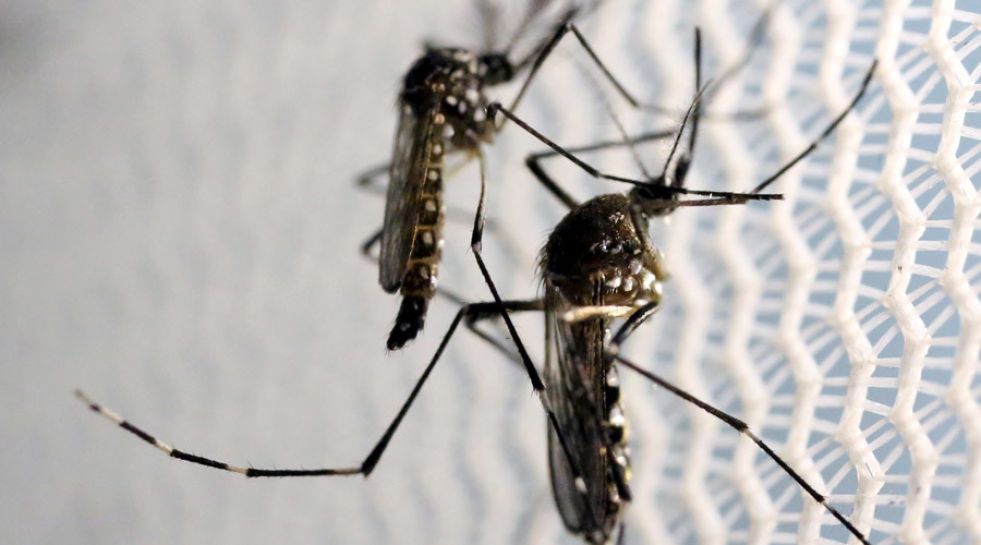 Freak of nature: FDA approves genetically engineered mosquitoes to combat Zika virus