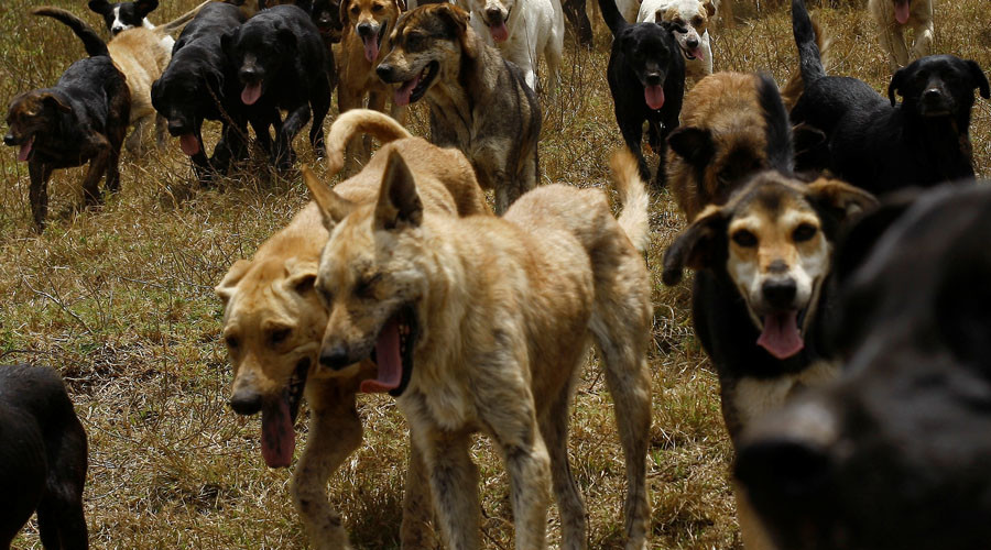 Pack of 50 stray dogs attack, partly eat elderly woman at ...