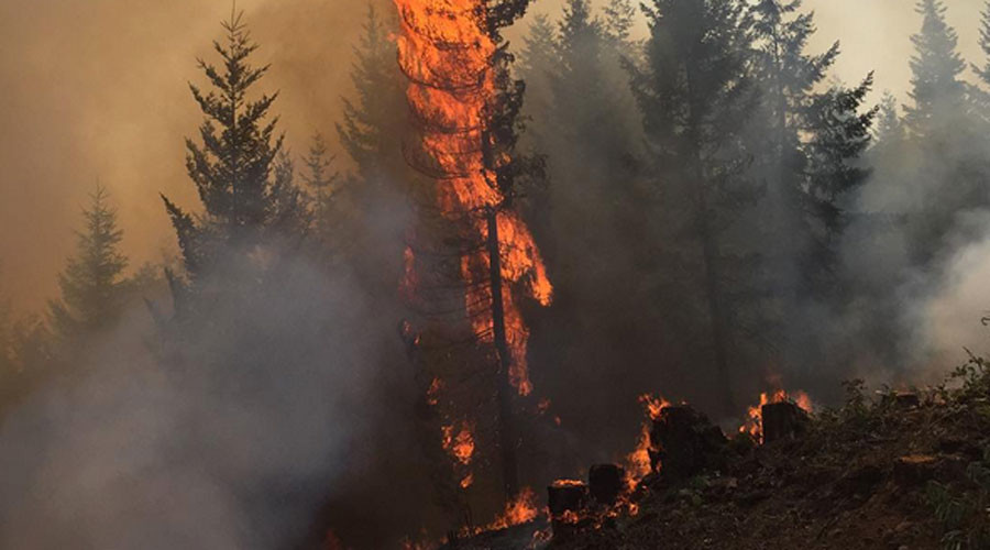 Oregon bills two pensioners $37mn for lawnmower-sparked wildfire