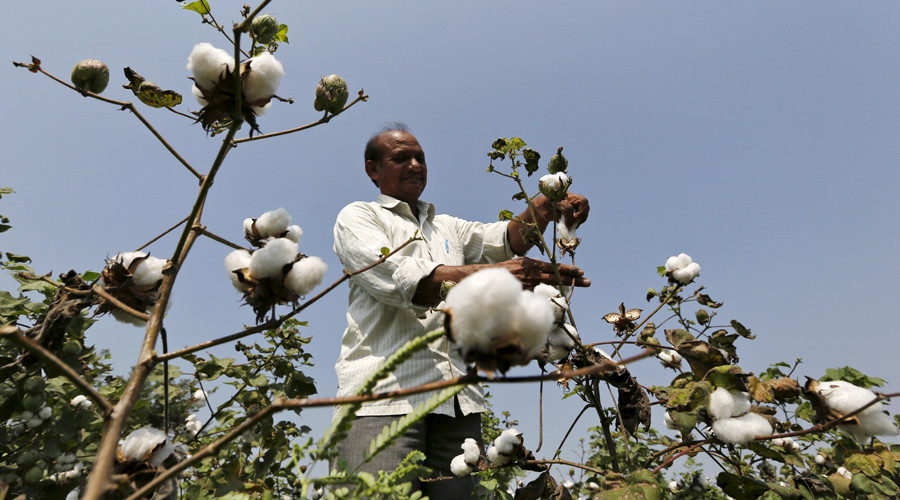 Spat causes Monsanto to pull new GM cotton seed from India