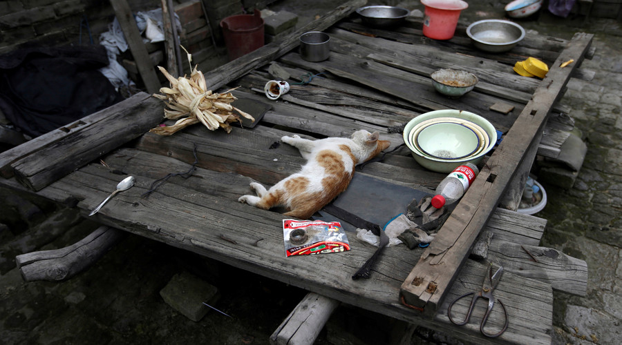 A cat rests in Li Yonghua's yard, in an area where land is sinking next to a coal mine in Helin village of Xiaoyi, China's Shanxi province, August 2, 2016. © Jason Lee