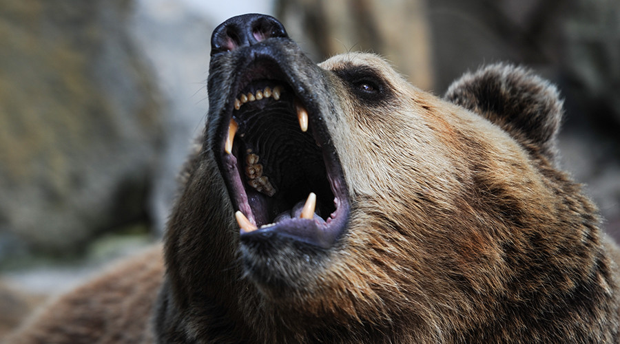 'The Revenant' on a quad bike: Reserve inspector mauled by bear, manages to reach fishing camp