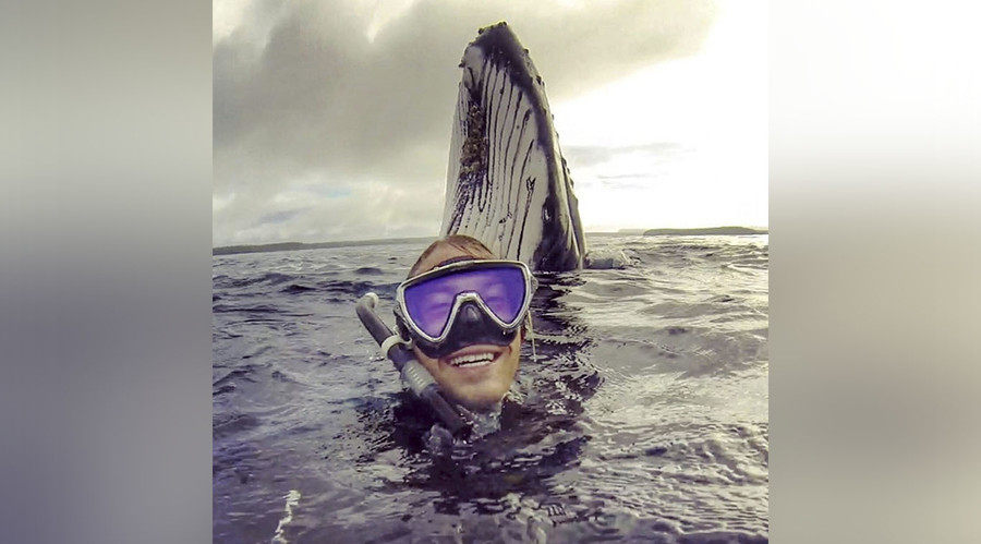 Whale hello there: Humpback photobombs snorkeling Aussie in Pacific Ocean (PHOTO)