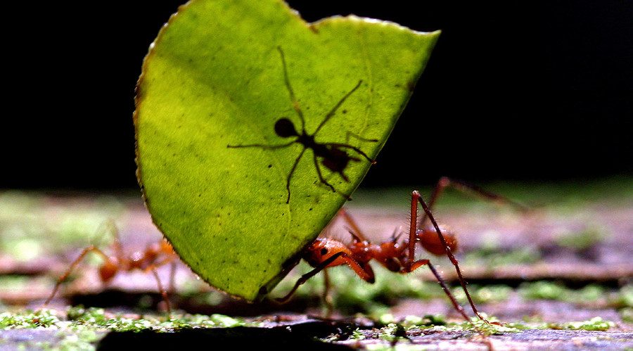 A bug's life: Hardy ants construct tragic but 'unique' colony in Soviet-era bunker