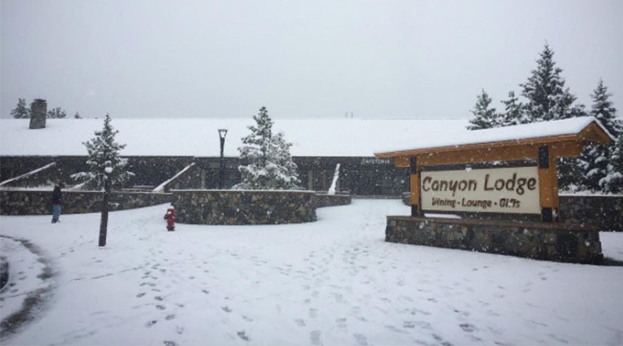 Stunning September snowstorm brings blizzard to Yellowstone (PHOTOS, VIDEOS)