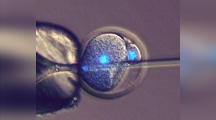 Motherless babies? Egg fertilization not needed for reproduction, scientists say