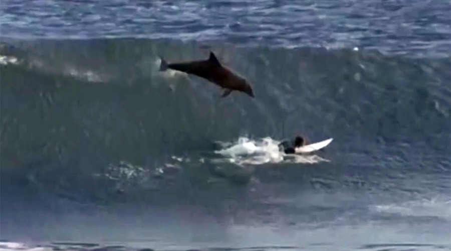 Dolphin totals surfer: Teen slammed by wave-catching bottlenose (VIDEO)