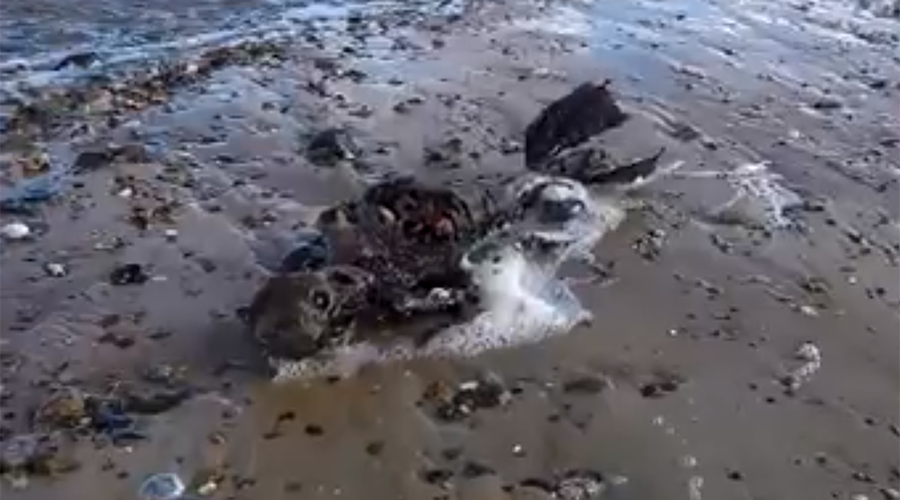 Someone may just have discovered a dead mermaid (VIDEO)