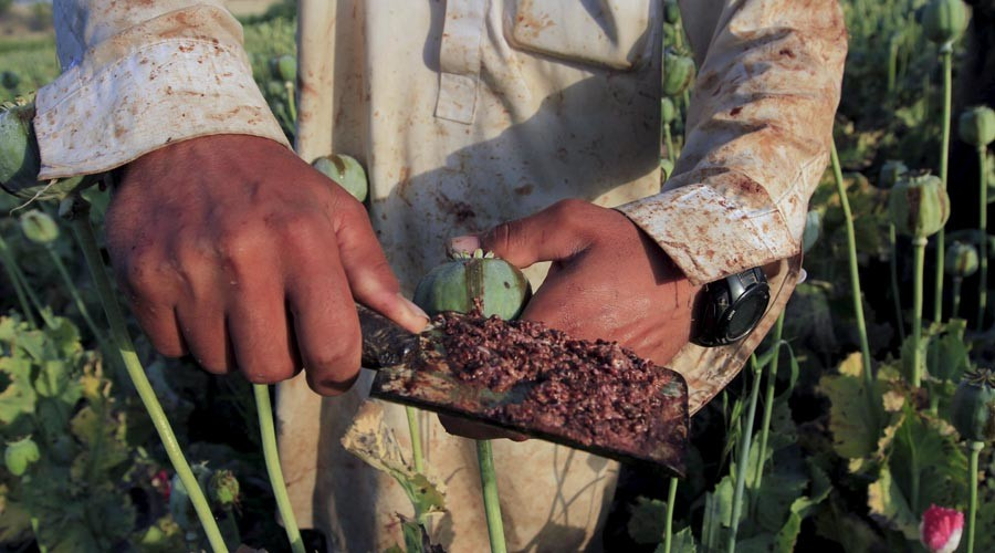 Afghan opium production up 43 percent in 1 year as eradication effort fails – UN