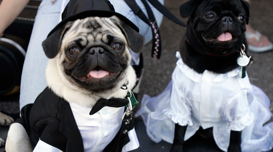 Former county employee racks up $350k debt on govt credit card to buy dog tuxedo, pay bills