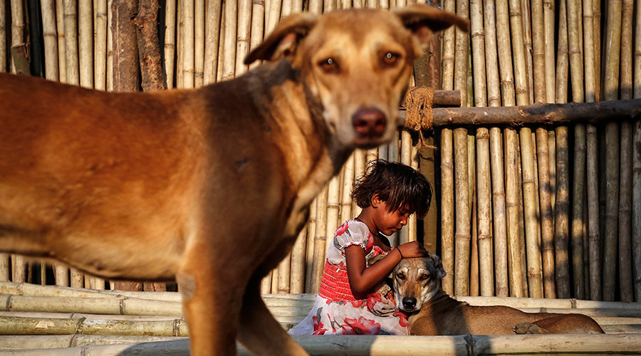 College in southern India offers gold coins for 'killing maximum number of stray dogs'