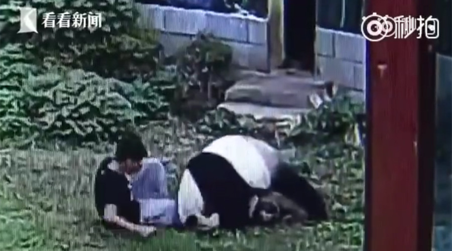 Panda wrestles with man who jumped into his enclosure to impress girls