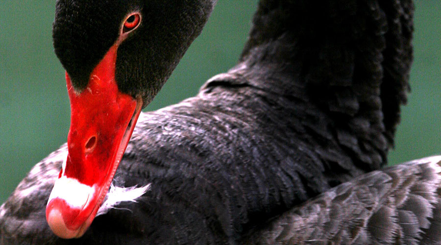 Markets brace for 'black swan' impact of US presidential election