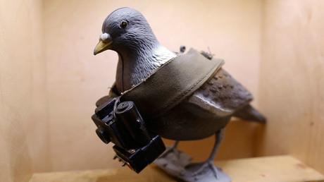 A mock-up of a pigeon with a small camera is seen on display at the 'Top Secret' Spy Museum in Oberhausen, July 10, 2013. © Ina Fassbender