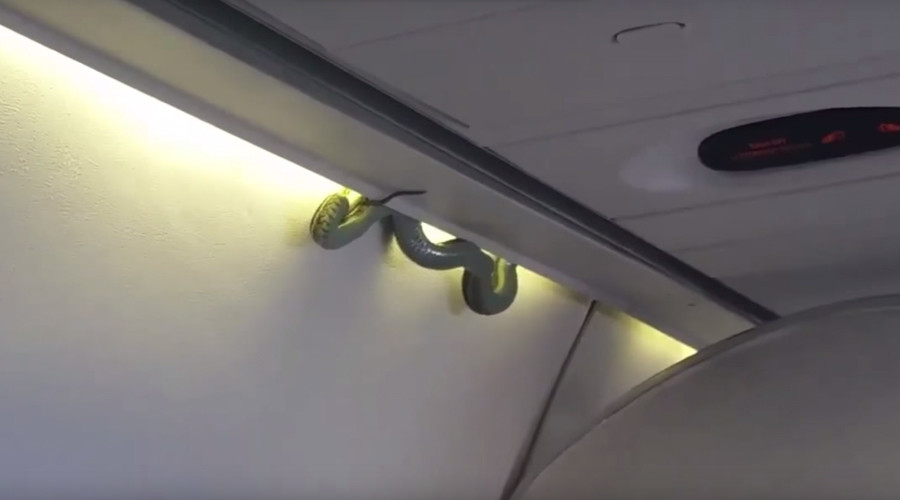 Snake on a plane: Venomous green viper spotted on board AeroMexico flight (VIDEO)