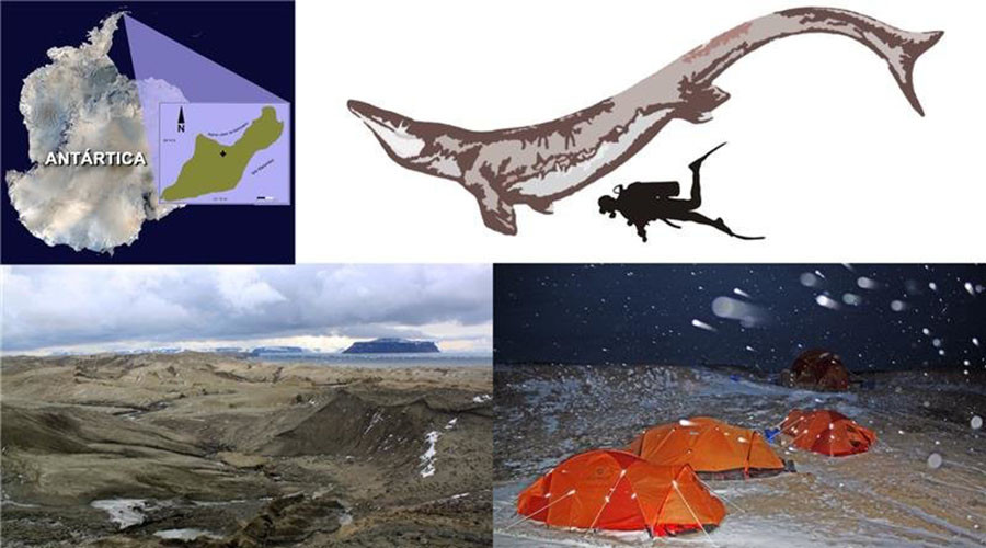 Evidence of enormous ancient sea lizard found in Antarctica