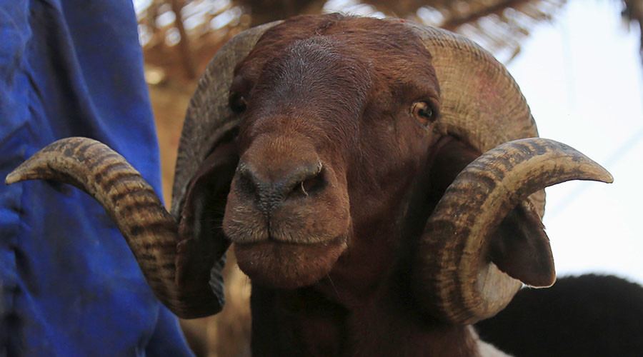 94yo man killed by rampaging ram
