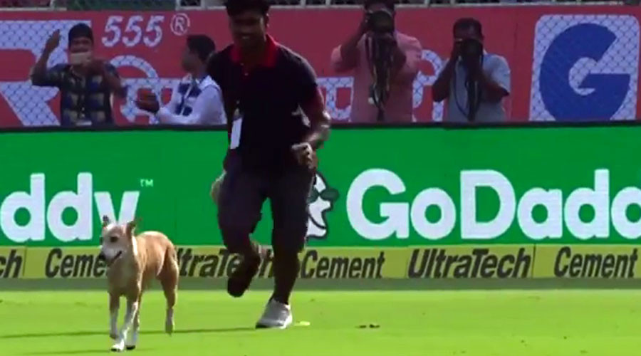 Fido in the outfield! Stray dog halts England versus India cricket match (VIDEO)