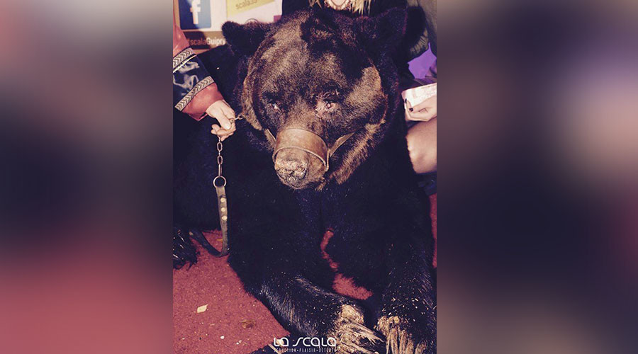 French nightclub criticized for displaying bear in chains