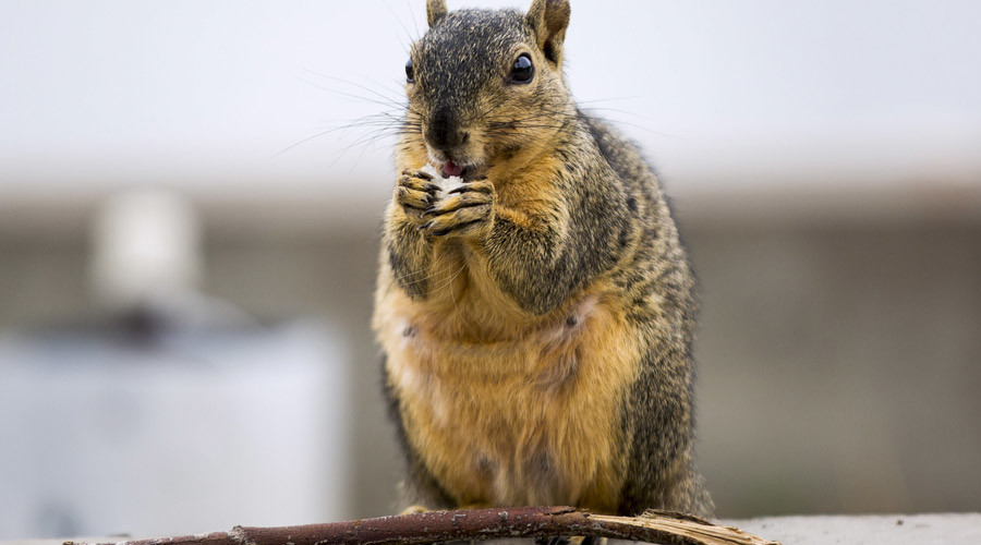 'Anti-squirrel' US politician injured after rodent causes bike smash (PHOTO)