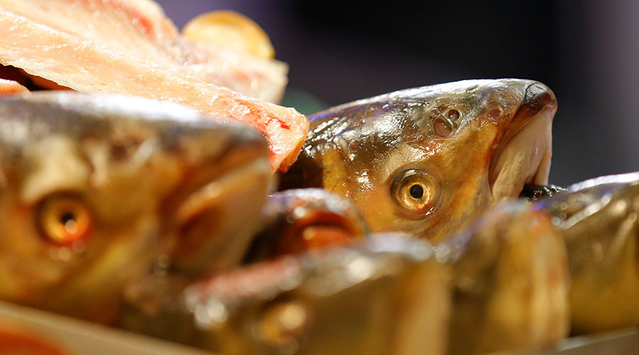 Not the plaice for it: Frosty reception for 5,000 fish frozen into Japanese ice-rink