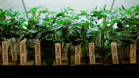 Marijuana use jumps among pregnant women in US – report