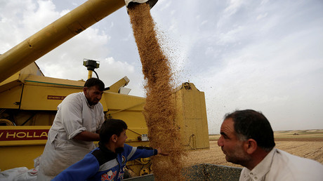 Farmers inspect wheat falling from a combine harvester at a wheat field in southern Idlib countryside, Syria © Khalil Ashawi