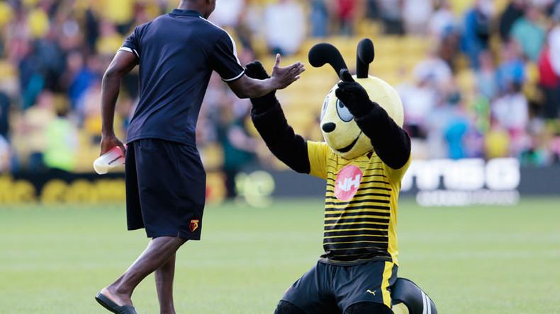 'Harry the Hornet out of order': Football mascot's mock ... Hornet Mascot Football