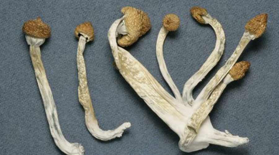 Magic mushrooms: Psychedelic drugs ease anxiety for people with life-threatening cancer