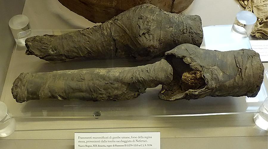 3,200-yo set of mummified legs belonged to Queen Nefertari, study concludes
