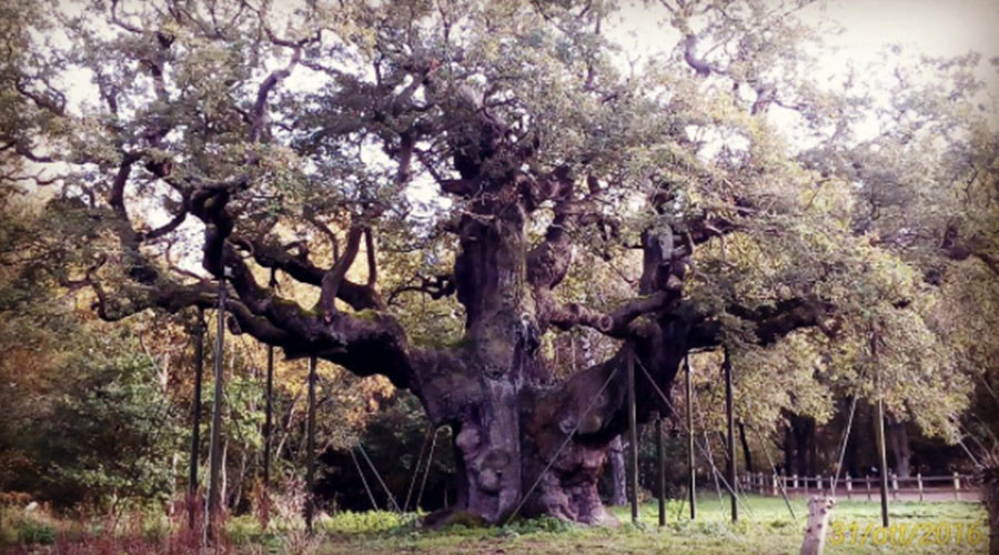Robin Hood's Sherwood Forest hideout under threat from frackers