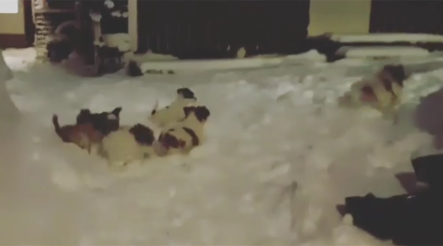 Rescue puppies see snow for first time, netizens' hearts melt (VIDEOS)