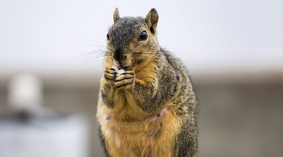 Sorry, hackers, but squirrels winning the cyber war - security expert
