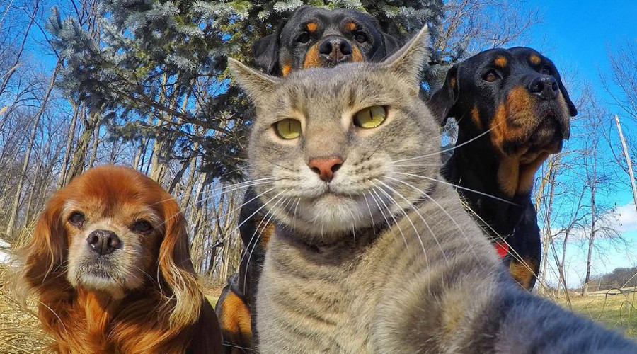Are you kitten me?: Selfie Cat's superior snaps are pawsitively purrfect (PHOTOS)