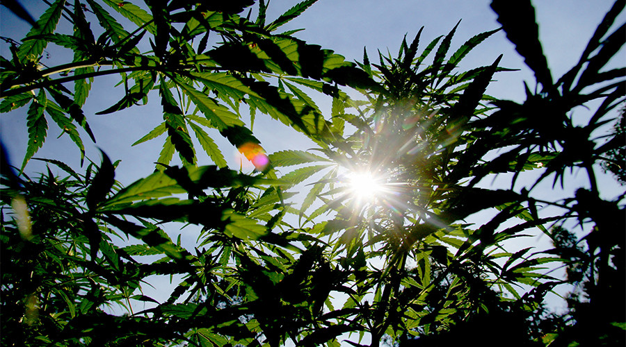 High time? German MPs legalize medical marijuana for severely ill