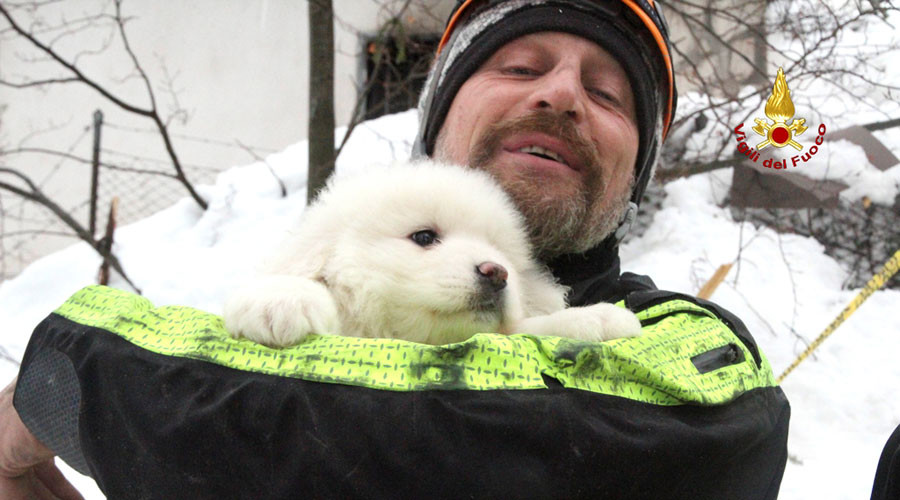 Puppies survive deadly Italian avalanche, rescued after 5 days under rubble (VIDEO)