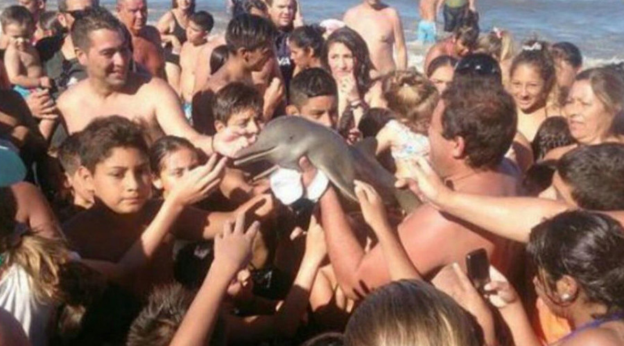 Death by selfie: Dolphin dies on Argentinian beach as onlookers clamor with camera phones