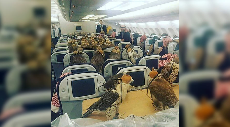 Astonishing pets on planes: Saudi royalty buys airfare for 80 falcons (PHOTOS)