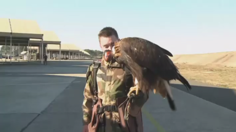 French Air Force eagle demonstrates drone-hunting skill to Hollande (VIDEO)