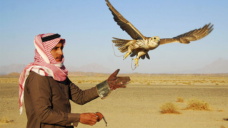 A falcon flies from the glove of its Saudi trainer during a hunting trip in the desert near Tabuk, 1,500 km (932 miles) from Riyadh. © Mohamed Alhwaity