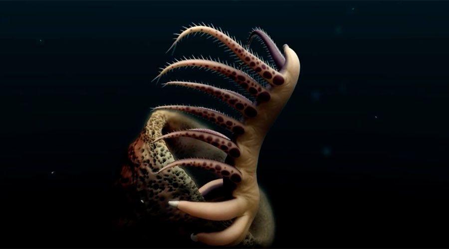 500mn years old & boasting 30 legs: 'Worm' fossil offers insight into ancient species (VIDEO)