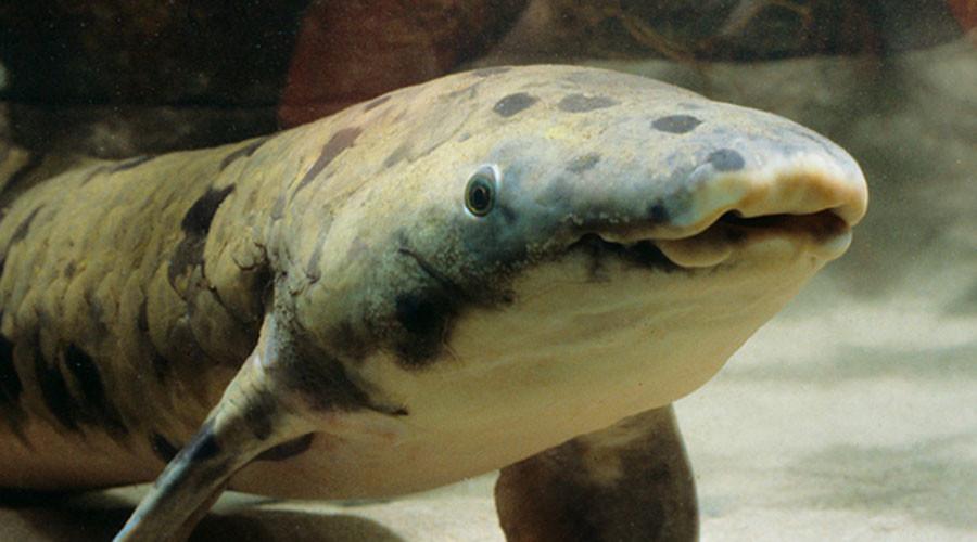 World's oldest captive fish euthanized by Chicago aquarium