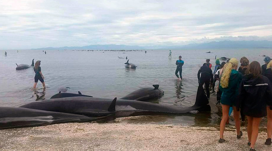 'Heartbreaking': Over 300 whales die in biggest recent stranding in New Zealand (PHOTOS)