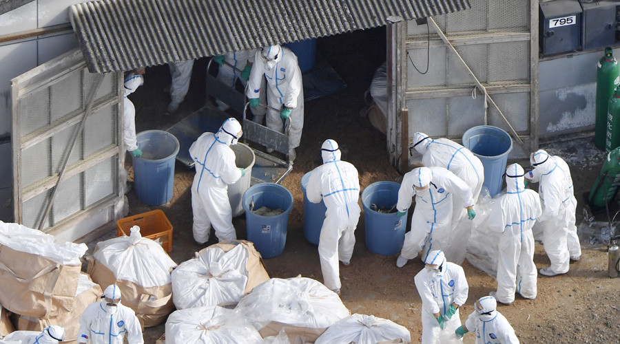 'Largest pandemic in 100 years' threatens China as bird flu spreads