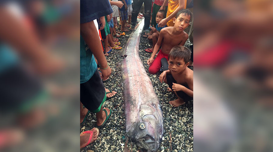 Mysterious oarfish sightings stoke earthquake fears in the Philippines (PHOTOS)