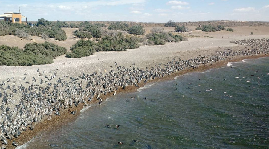 '1mn penguins' descend on Argentina in spectacular scene (VIDEOS, PHOTOS)