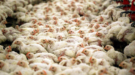 A trade deal between the US & UK could see chlorine-dipped chicken for sale in British supermarkets. © Peter Andrews